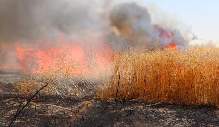 Kerkük | İthal Araplar Kürtlerin ekinlerini yakmaya devam ediyor!